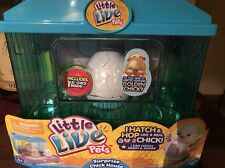 LIttle Live Pets SURPRISE CHICK Limited Edition Guaranteed GOLD LUCKY CLUCKY New