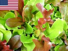 Mesclun Lettuce Seeds- 500+  2018 Seeds            Max. Shipping $1.69/order