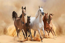 STUNNING WILD HORSES #22 QUALITY CANVAS A1 HORSES PICTURE WALL ART HOME DECOR