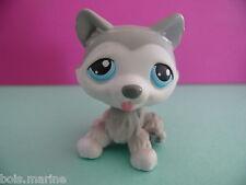 petshop chien husky gris blanc / grey white dog N° 70