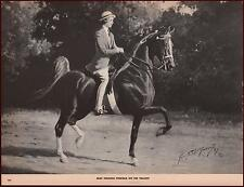 VALIANT, Five Gaited Saddle Horse by George Ford Morris, vintage print 1952