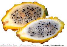PITAHAYA gelb * 10 Samen * Kübelpflanze * leckere Früchte * Obst * Drachenfrucht