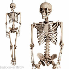 1.6m Halloween Horror Deluxe Luxury Life Size Hanging Human Skeleton Decoration