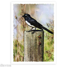© ART _ A5 Willy Wagtail Australian Wildlife Bird Original Artist Print by Di