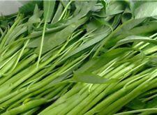 Water Spinach/Kang Kong Vegetable Leaf Plants 100 Seeds