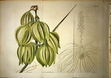 CURTIS BOTANICAL MAGAZINE 1821 Vol 48  DOUBLE H/C - Yucca - 2236