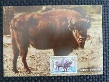France MK 1974 Bison bisonte europeo Buffalo maximum carta carte MAXIMUM CARD MC cm c4713