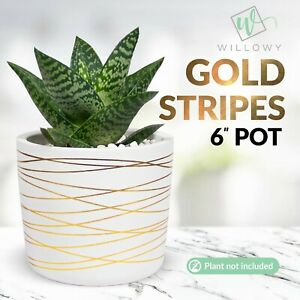 6 Inch Ceramic Pot - White w/ Gold Stripes - Pebbles and Drainage plug included!