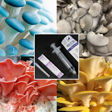 Gourmet Mushroom Liquid Culture Syringe - Many Different Species