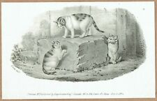 Original 1827 John West Giles print of Cats, published by Engelmann