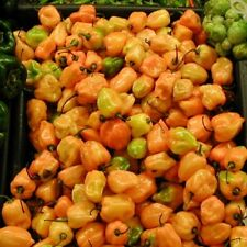 Pepper Chilli - Habanero Lemon - 25 Seeds