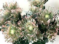 AUSTRALIAN NATIVE FLOWER BLUSH LEUCOSPERMUM FLOWERS STEM ARTIFICIAL FAKE FLOWER