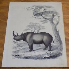 1846 Antique Print / Rhinoceros