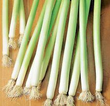 1400 Samen Lauch Giant Winter Gemüse