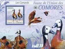 Timbre Oiseaux Canards Comores BF208 ** année 2009 lot 28014 - cote : 21 €