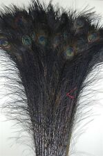 """100 Pcs BLEACHED PEACOCK TAILS Feathers 35-40"""" DEEP BLACK; Costume/Art/Crafts"""