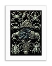 Crustacé crabe homard Ernst Haeckel GERMANY Nature Biology Toile Art Prints