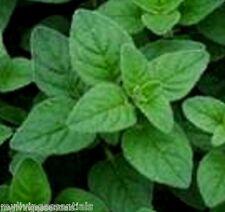 13 Varieties Herbs Emergency Survival Garden Seeds Heirloom Non GMO Lot