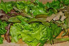 French Heirloom Lettuce (Greens) Seed Assortment- 9 Varieties-     4,700+ Seeds