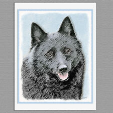 6 Schipperke Dog Blank Art Note Greeting Cards