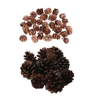 40pcs Cute Natural Dried Pine Cones In Bulk Dried Flowers for Xmas Decor