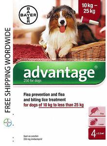 Pack 4 Advantage 250 Large Dog 10kg - 25kg (21lb - 55 lb) - ADVANTAGE