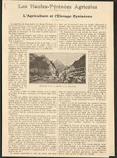 65 AGRICULTURE ET ELEVAGE PYRENEENS ARTICLE DE PRESSE PAR J. SEMPE DEPUTE 1925