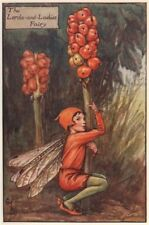 Lord's-and-ladies Fairy by Cicely Mary Barker. Autumn Flower Fairies c1935
