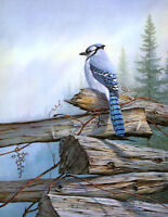 Canvas Print Bird Blue jay Oil painting Picture Giclee Printed on canvas L644
