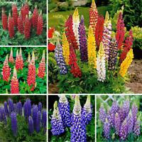 100pcs Lupine Flower Seeds Rare 6 Kinds Color Perennail Bonsai Field Home Garden