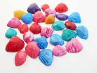 "100 Dyed Ark Shells Small (1/2-3/4"") Beach Hobby Crafts Decor Colorful Ocean Art"