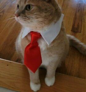 Dog Cat Animal Cute Red Tie Collar Pet Adjustable Neck Tie US Ship