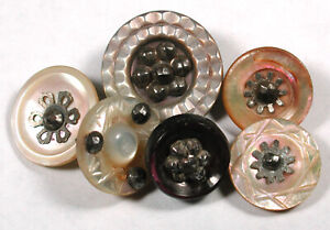 6 Antique Carved Shell Buttons w/ Cut Steel Accent 3/8 to 5/8""