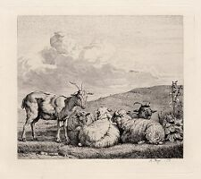 "Lovely 1800s KAREL DUJARDIN Antique Etching ""Resting Sheep and Goats"" SIGNED COA"