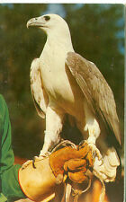 SILVER SPRINGS,FLORIDA-ROSS ALLEN'S REPTILE INSTITUTE-BIRDS OF PREY-(BIRDS-142)