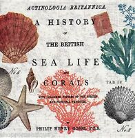 4 x Single PAPER NAPKINS Nautical Sea Life Shells Coral DECOUPAGE or CRAFTS