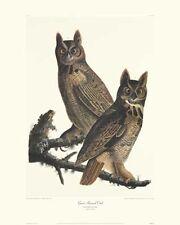 Great Horned Owl by John James Audubon Canvas Giclee