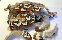 BULK 50pcs Natural 4-10cm Reeves Pheasant Feathers Millinery DIY Craft Decor
