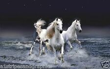 WHITE Horse Stallion Mustang #2 Wall RV Trailer Mural Decal Decals Graphics