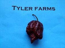 15+ Chocolate Trinidad Moruga Scorpion Pepper Seeds (hot organic chili, chile)