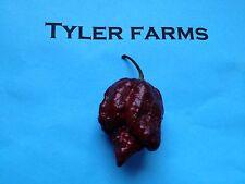15+ Chocolate Trinidad Moruga Scorpion Pepper Seeds (hot organic chili, chile)