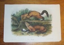 Audubon. Quadrupeds. Octavo. Pine Martin.