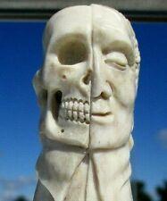Januskopf skull aus Horn geschnitzt , Wunderkammer - memento mori !