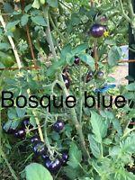 20 Graine Tomate Bosque Blue/osu Blue (Bio/Reproductible ) Frais De Port Unique