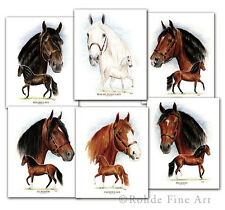 Paso Fino Horse Equine Art set of 6 Famous Stallions - Rohde - Deal!