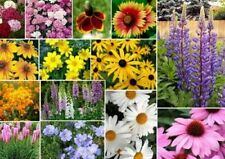200 MIXED WILDFLOWER  SEEDS FREE SHIPPING FRESH SEED