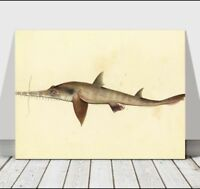 VINTAGE FISH ART - Long Nose Saw Shark - CANVAS ART PRINT POSTER - 18x12""