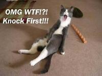 Funny  Cat OMG!  Refrigerator / Tool Box / File Cabinet Magnet