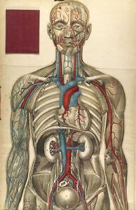 Framed Prints - Vintage Human Internal Organs and Nervous System (Medical Art)
