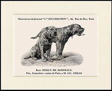DOGUE DE BORDEAUX TWO DOGS GREAT DOG PRINT MOUNTED READY TO FRAME